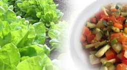 Die gesunde Ernährung vs der